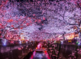 One of the most popular venues for cherry blossom viewing in the spring is in Meguro River, Tokyo. Cherry blossoms are symbolic of the diplomatic friendship between the United States and Japan. Photo by Makoto_Honda