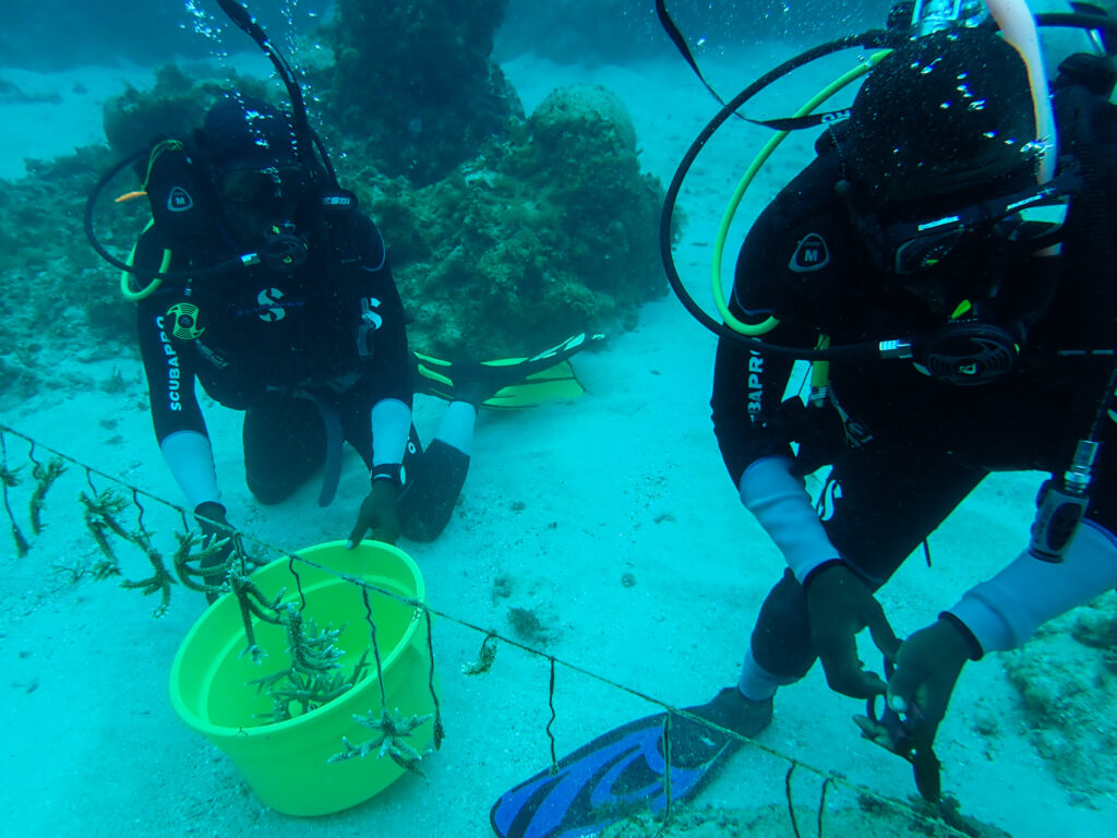 Jamaica's coral gardeners play a vital role in transforming the marine life off the north coast of Jamaica. Photo courtesy of Talk Up Your Media for United Nations Development Programme
